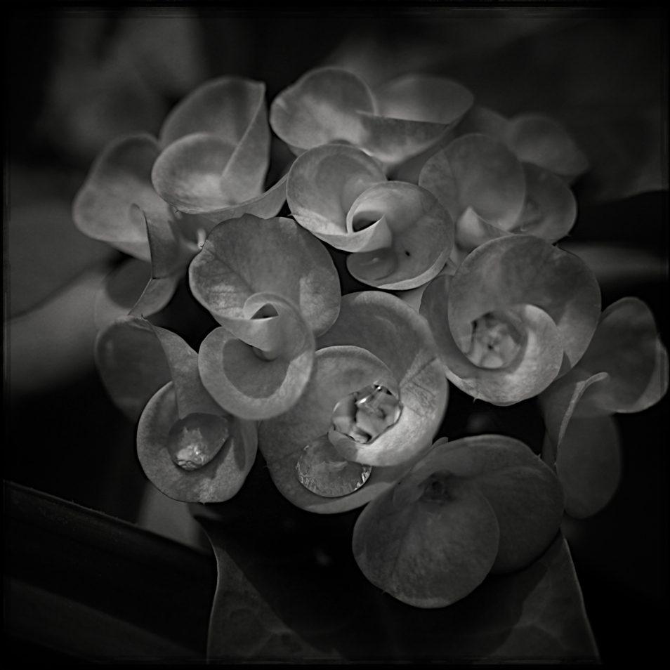 flore1