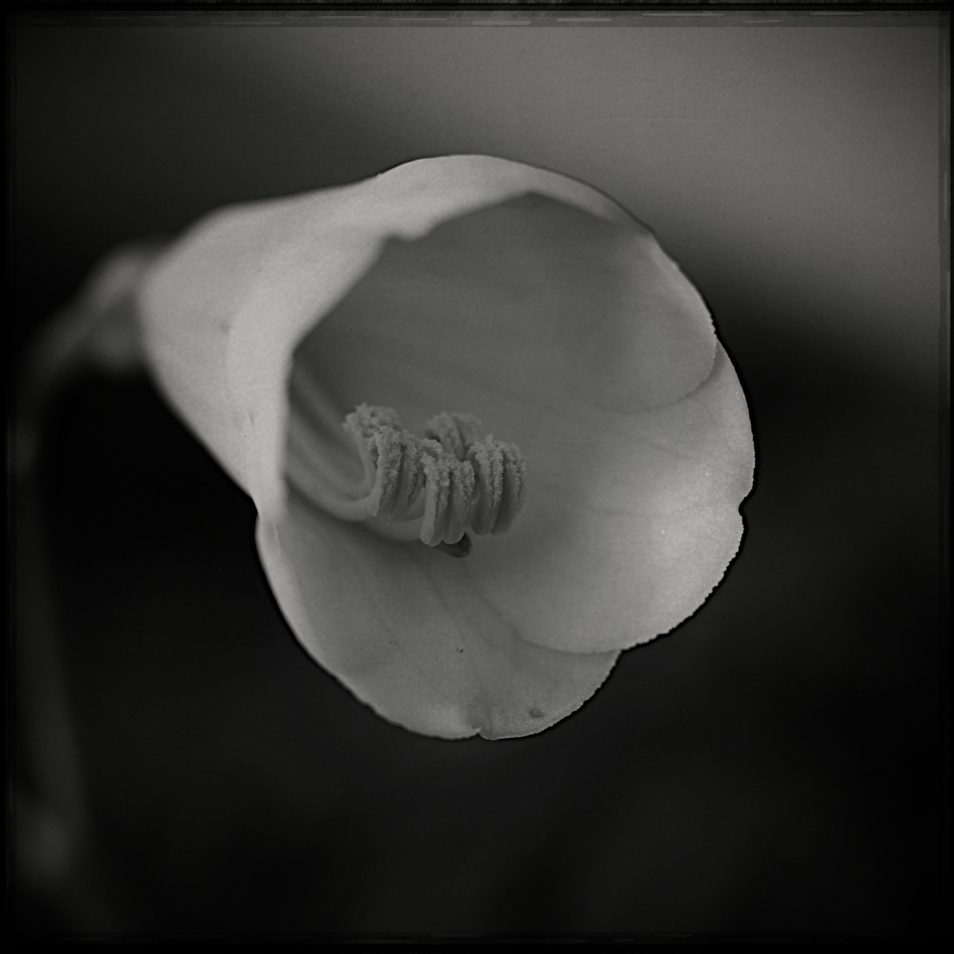 flore2