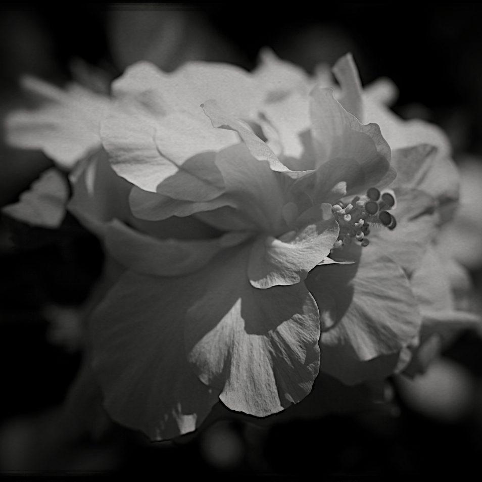 flore41